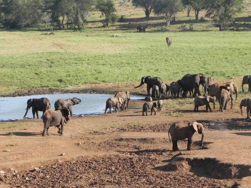 elephant kenya africa