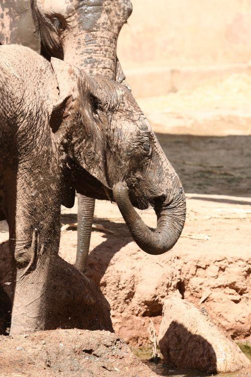 elephant angola zoo