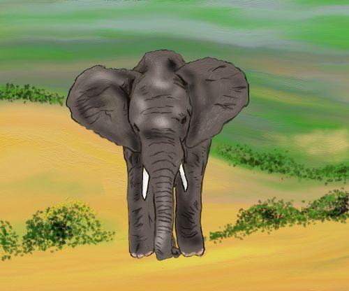 elephant africa zoo
