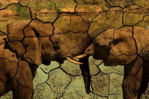elephant drought animals