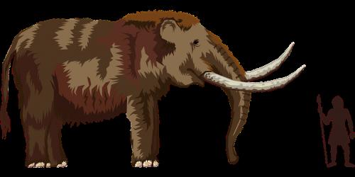 elephant mammoth mastodon