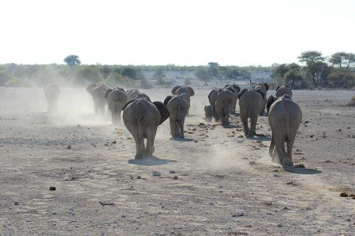 elephant namibia etosha national park