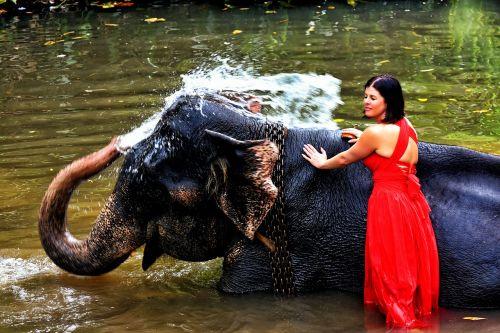 elephant woman squirt