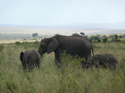 elephant kenya masai