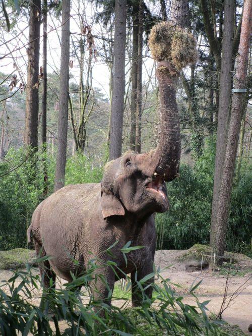 elephant eats zoo