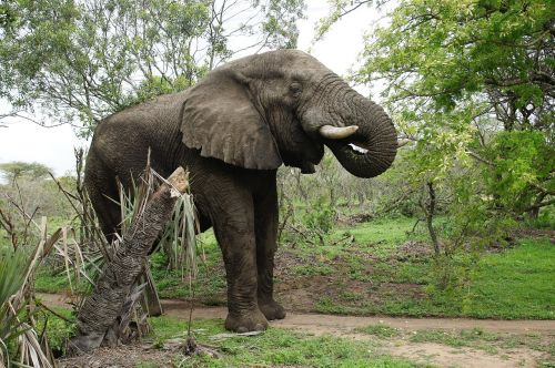 elephant game reserve