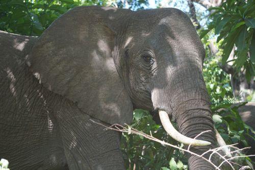 elephant africa tanzania