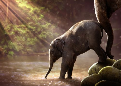 elephant young watering hole