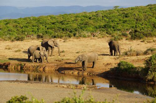 elephant water hole africa
