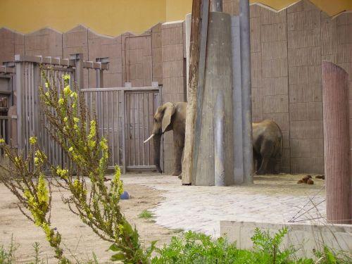elephant zoo animal enclosures