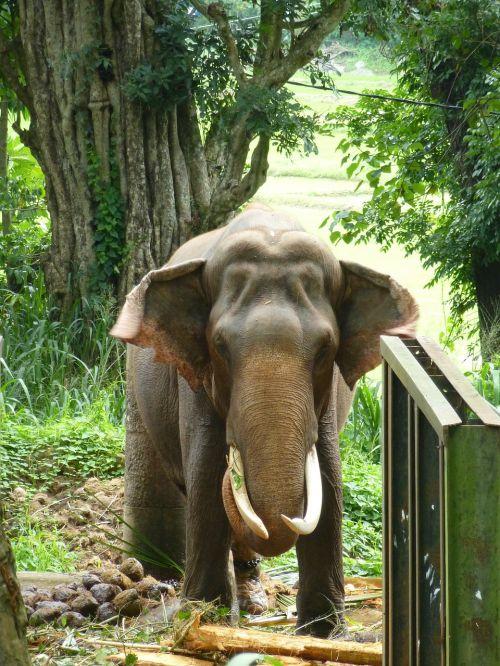 elephant animals animal
