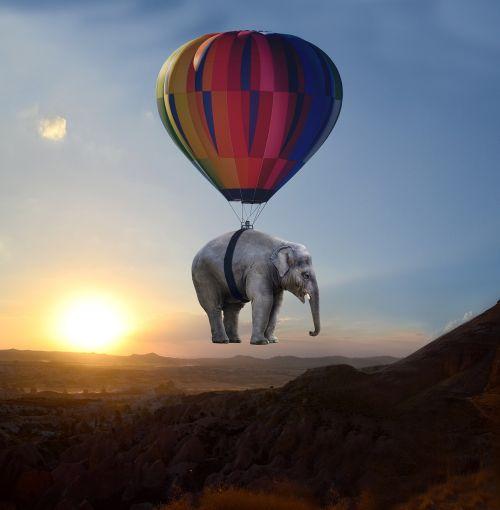 elephant sunset steppe