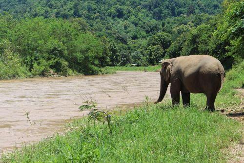 elephant water proboscis