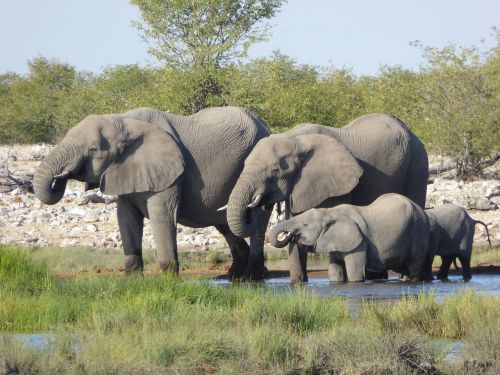elephant africa safari