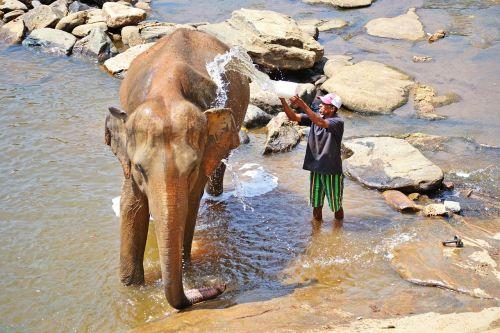 elephant bath maha oya river