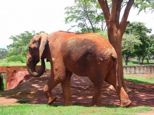 elephant jungle savannah