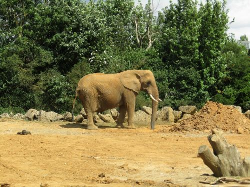 elephant dusty zoo