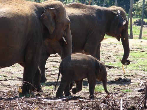 elephant baby elephant wild