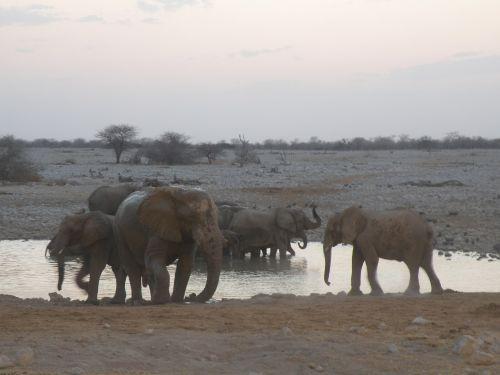 elephant namibia safari
