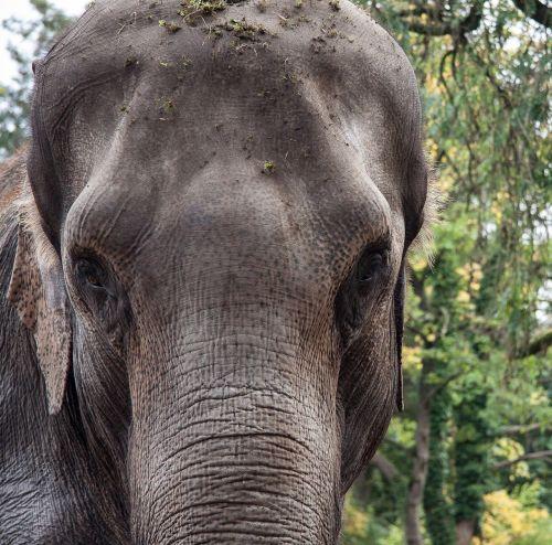 elephant animal portrait
