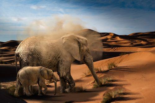 elephant baby elephant desert