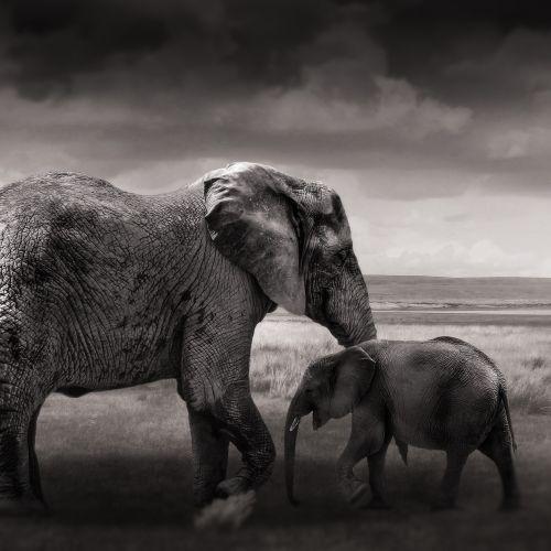elephant baby elephant young
