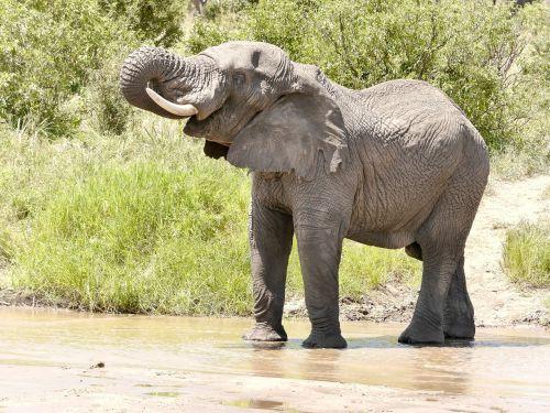 elephant nature experience