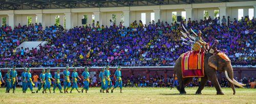 elephant festival surin