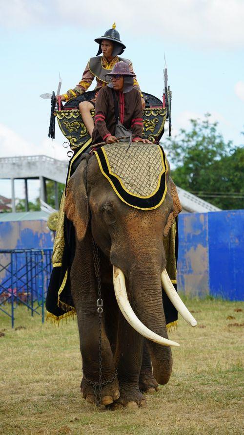 elephant tusks warrior