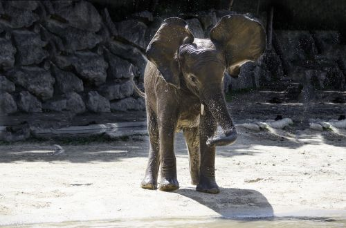 elephant baby elephant funny