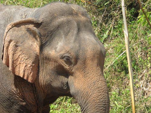 elephant elephant head thailand