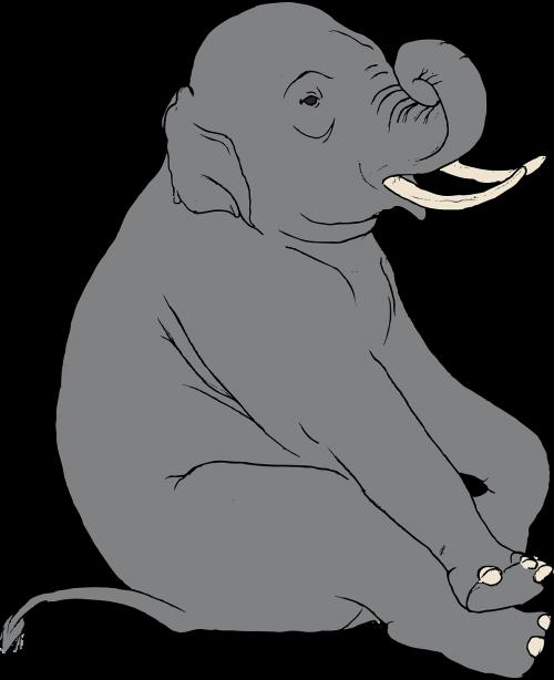 elephant indian animal