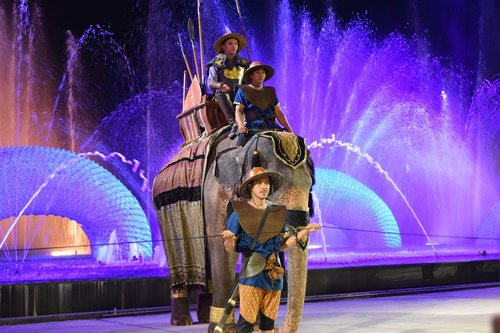 elephant  elephants
