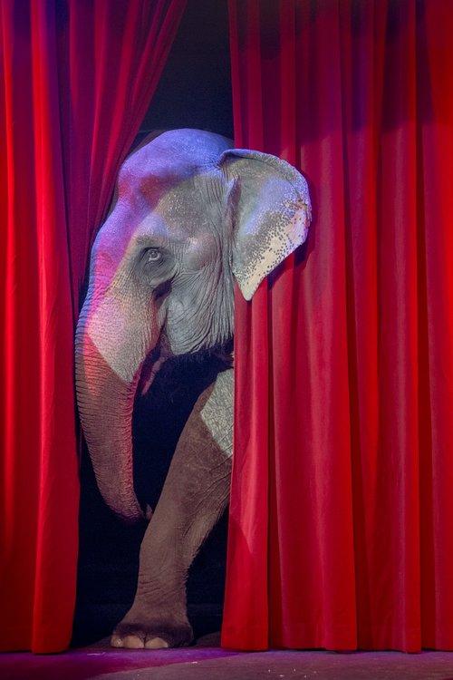 elephant  circus  shy