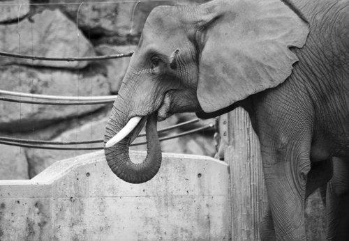elephant  powerful  animal world