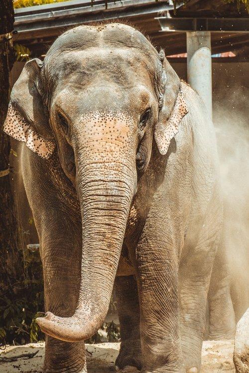 elephant  zoo  large