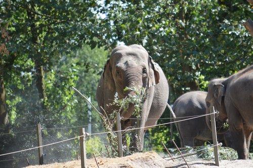 elephant  blijdorp  rotterdam