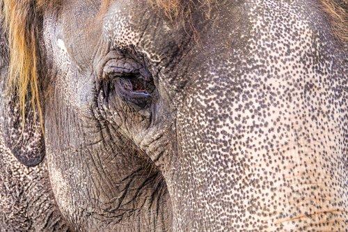 elephant  eye  zoo