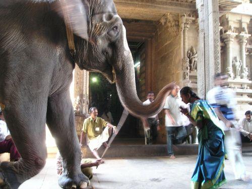 elephant holy deity