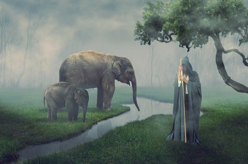 elephant  guard  man