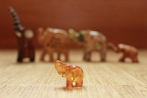 elephant  amber  elephants