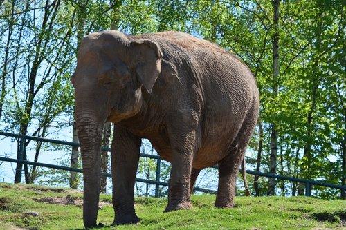 elephant  zoo  animal