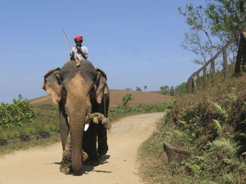 elephant india aanayum paappanum