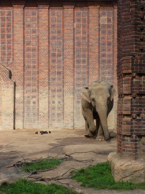 elephant animal peanut
