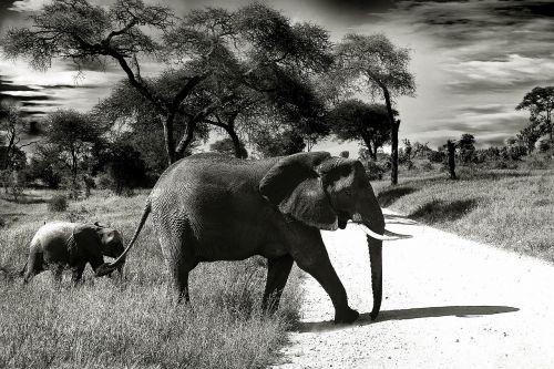 elephant baby elephant animal
