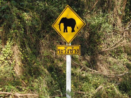 elephant traffic sign warnschild