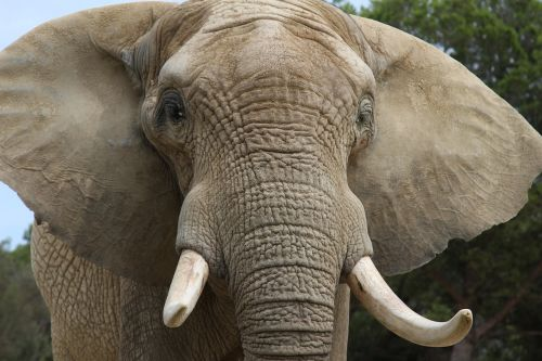 elephant zoo animals