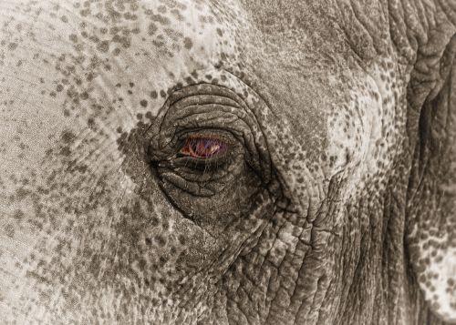 elephant eye sad