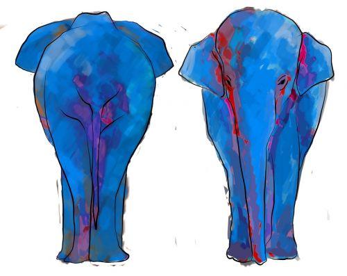 elephant illustration colors