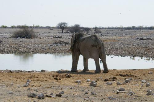 elephant namibia watering hole